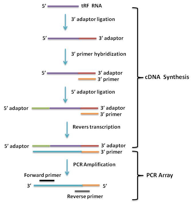 lncRNA肿瘤芯片