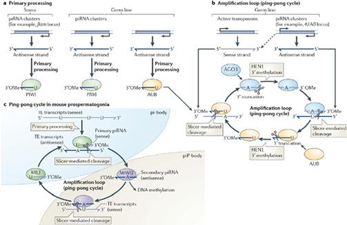 piRNA测序