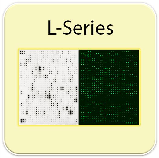 人抗体芯片可检测182个脂肪因子  Human L182 Array