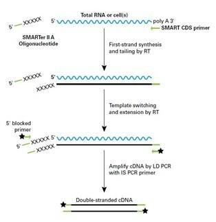 lncRNA(长链非编码RNA)测序