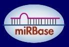 microRNA实验85折促销(microRNA靶基因验证,定量PCR,microRNA-Seq,microRNA靶基因分析)
