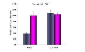 双荧光素酶报告基因85折促销