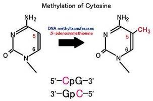 DNA甲基化检测