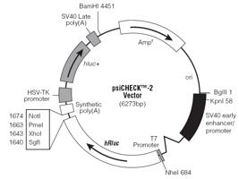 microRNA-circRNA(lncRNA) 靶基因验证实验